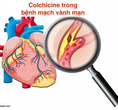 colcichine-benh-mach-vanh